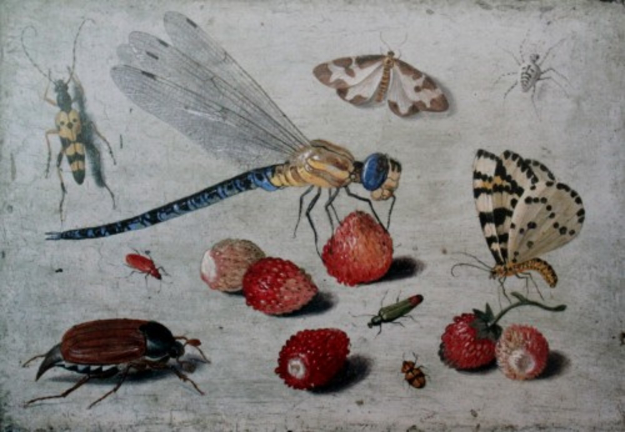 Jan-van-Kessel-I-Dragon-fly-moths-spider-beetles-with-strawberries.jpg
